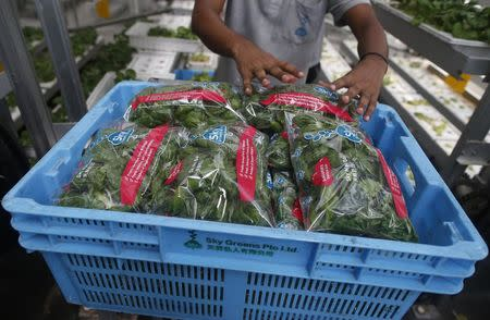 A worker packs fresh produce at Sky Greens vertical farm in Singapore July 30, 2014. REUTERS/Edgar Su
