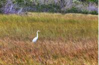 """<p><strong>Where to go:</strong> <a href=""""https://www.nps.gov/ever/planyourvisit/dryseason.htm"""" rel=""""nofollow noopener"""" target=""""_blank"""" data-ylk=""""slk:Everglades National Park"""" class=""""link rapid-noclick-resp"""">Everglades National Park</a> starts its dry season at the end of November, when migratory birds come from all over the country for warmer weather (and mosquitoes begin to disappear). </p><p><strong>When to go: </strong>Late November</p><p><a class=""""link rapid-noclick-resp"""" href=""""https://go.redirectingat.com?id=74968X1596630&url=https%3A%2F%2Fwww.tripadvisor.com%2FHotels-g143024-Everglades_National_Park_Florida-Hotels.html&sref=https%3A%2F%2Fwww.redbookmag.com%2Flife%2Fg34045856%2Ffall-colors%2F"""" rel=""""nofollow noopener"""" target=""""_blank"""" data-ylk=""""slk:FIND A HOTEL"""">FIND A HOTEL</a></p><p><strong>RELATED: <a href=""""https://www.goodhousekeeping.com/life/travel/g4213/50-stunning-animals-from-our-national-parks/"""" rel=""""nofollow noopener"""" target=""""_blank"""" data-ylk=""""slk:50 Stunning Animals From Our National Parks"""" class=""""link rapid-noclick-resp"""">50 Stunning Animals From Our National Parks</a></strong></p>"""