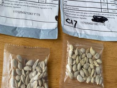 Dubious seed packets reach citizens in India, US, Japan; authorities suspect 'brushing scam', 'agro-terrorism'