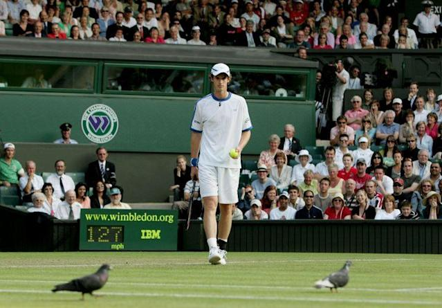 Pigeons disrupting play is nothing new at the All England Club. (Getty)