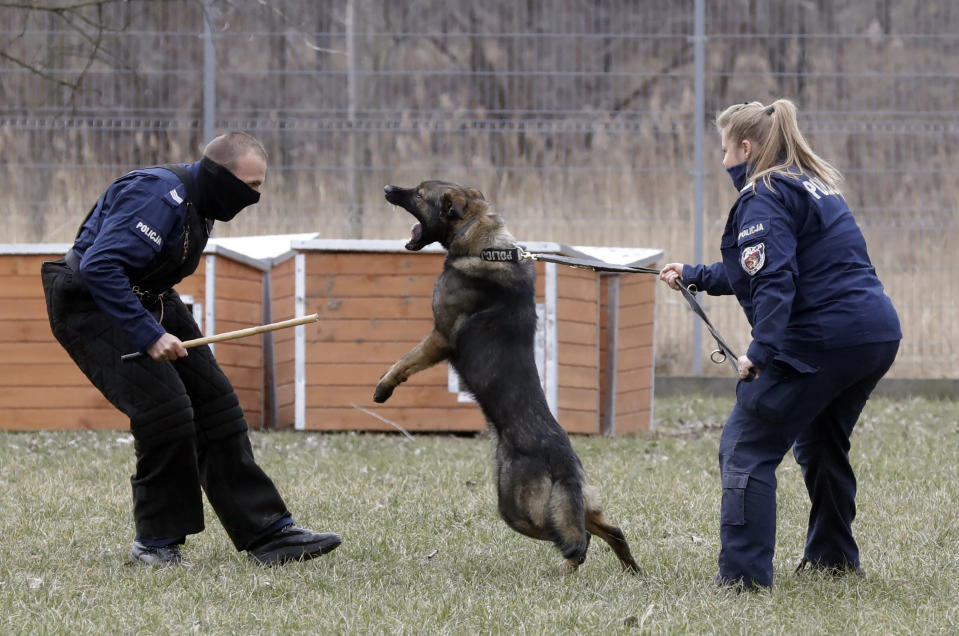 "Police officer Katarzyna Matuszewska, right, in training with patrol dog Ort, in Warsaw, Poland, on Friday, March 19, 2021. When they age, the dogs and horses that serve in Poland's police, Border Guard and other services cannot always count on a rewarding existence. Responding to calls from concerned servicemen, the Interior Ministry has proposed a bill that would give the animals an official status and retirement pension, hoping this gesture of ""ethical obligation"" will win unanimous backing. (AP Photo/Czarek Sokolowski)"