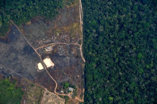 Environmentalists warn 2020 is on track to be the most destructive year ever for the world's biggest rainforest