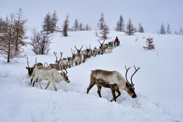 Global climate change means permanent ice, known as 'eternal ice' is melting for the first time in Mongolia - threatening the reindeer who live there (Picture: Getty)