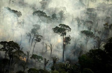 Fires in Brazil's Amazon Rainforest Surge in July, Worst in Recent Days; Activists Warn of More Damage