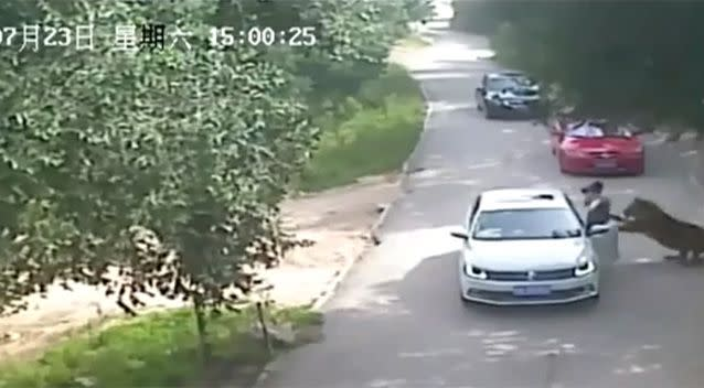 The first woman was attacked by the tiger after she got out of the car. Photo: LiveLeak