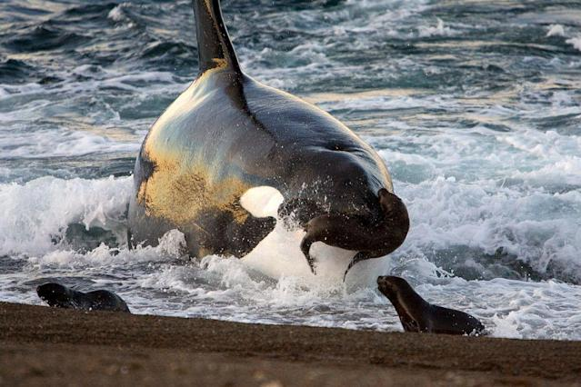 Picking a team name is all about what's most intimidating, and whales do all right in that department. (Getty Images)