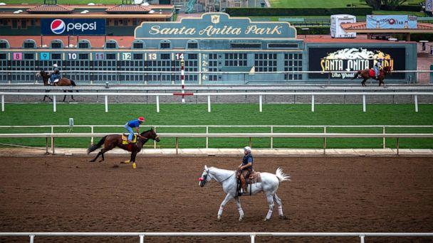 PHOTO: Race horses are seen during their morning workout at Santa Anita Park racetrack, June 15, 2019, in Arcadia, Calif. (David Mcnew/Getty Images)