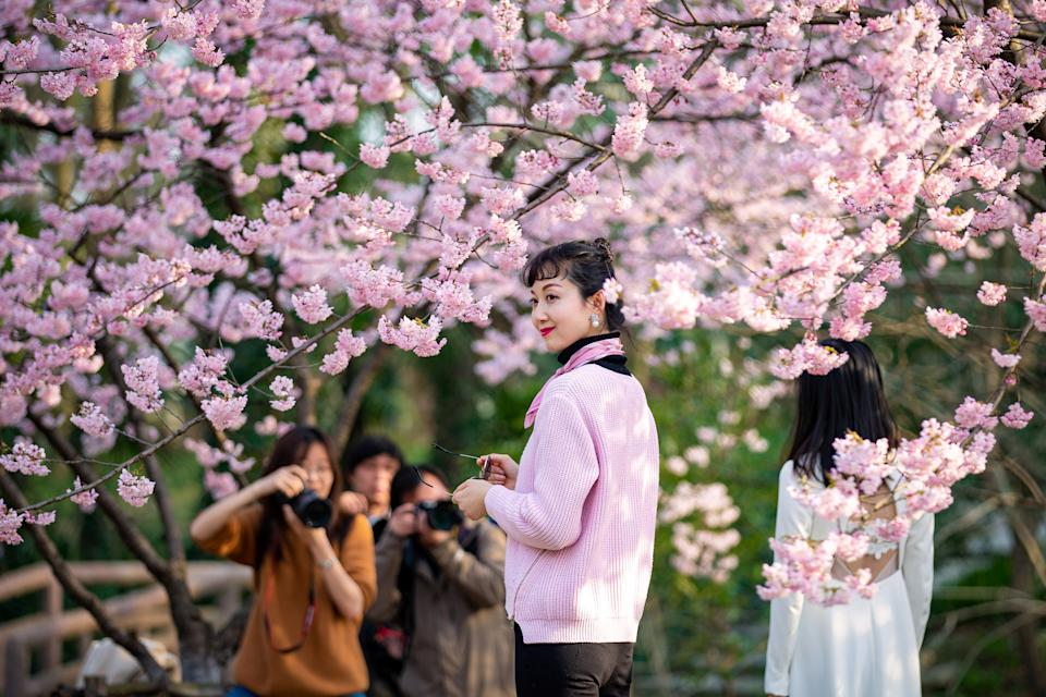Visitors pose for pictures under blooming cherry blossoms at a botanical garden in Nanjing, Jiangsu province, China March 14, 2019. Picture taken March 14, 2019. REUTERS/Stringer  ATTENTION EDITORS - THIS IMAGE WAS PROVIDED BY A THIRD PARTY. CHINA OUT.