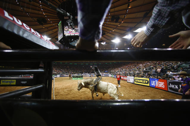 A competitor rides a bull during the Professional Bull Riders invitational at Madison Square Garden in New York, January 5, 2013. Picture taken January 5, 2013. REUTERS/Eric Thayer (UNITED STATES - Tags: SPORT ANIMALS SOCIETY)