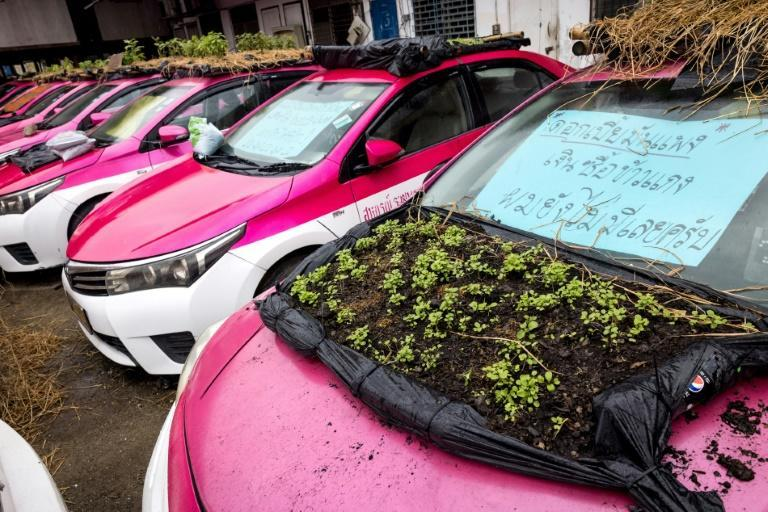 Plants are grown on the bonnet of one car left idle (AFP/Jack TAYLOR)