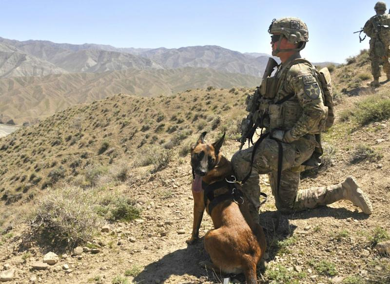 A soldier and Laika in Afghanistan