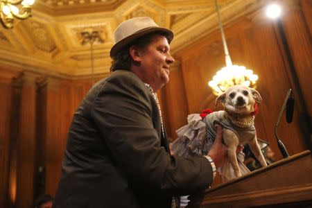 """Frida, a female Chihuahua (R), stands on a podium before the San Francisco Board of Supervisors issues a special commendation naming Frida """"Mayor of San Francisco for a Day"""" in San Francisco, California November 18, 2014. REUTERS/Stephen Lam"""
