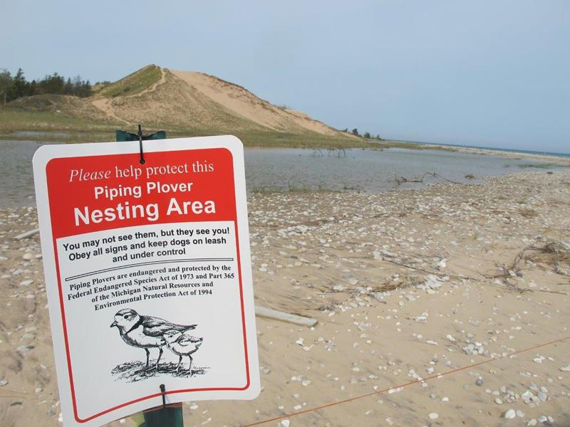 In this May 30, 2019 photo, a sign warns visitors of a piping plover nesting area in Glen Haven, Mich. Trouble is brewing for the piping plovers, already one of the Great Lakes region's most endangered species, as water levels surge during a rain-soaked spring that has flooded large areas of the Midwest. (AP Photo/John Flesher)