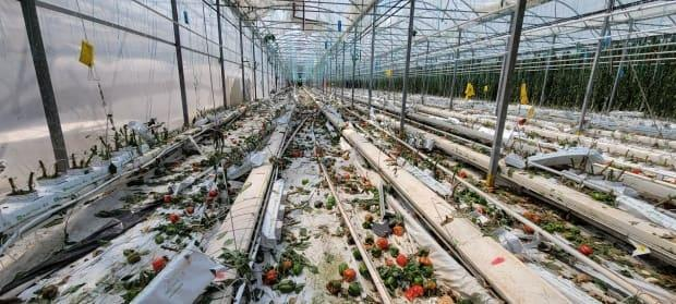 Francis Lavigne-Theriault with Northern Tornadoes Project snapped this shot of tornado damage at a Leamington greenhouse. ( Francis Lavigne-Theriault/Twitter - image credit)