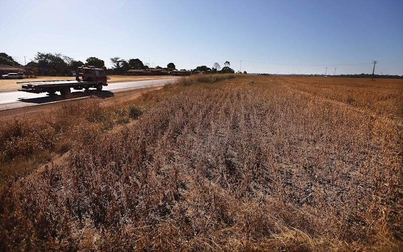 """ARIQUEMES, BRAZIL - JUNE 26: A truck passes a soy field in deforested section of the Amazon rainforest on June 26, 2017 near Ariquemes, Rondonia state, Brazil. Soy production in Brazil is a significant contributor to deforestation. Deforestation is increasing in the Brazilian Amazon and rose 29 percent between August 2015 and July 2016. According to the National Institute for Space Research, close to two million acres of forest were destroyed during this timeframe amidst a hard hitting recession in the country. According to the Environmental Defense Fund, 'Deforestation causes climate change on a global scale, and is responsible for about 15 percent of the world's greenhouse gas emissions."""" (Photo by Mario Tama/Getty Images)"""