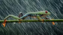 'Rainy day' by @hendymp, Indonesia. (Hendy mp:AGORA images)