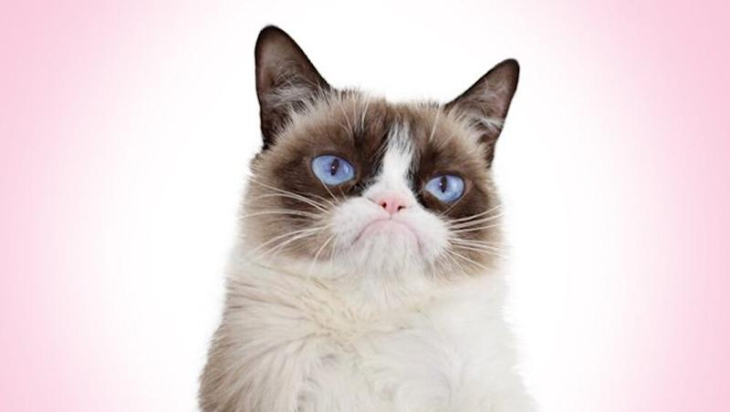 Grumpy Cat Dies; Internet's Beloved Feline Who Made People Smile with Her Angry Expression Passes Away at 7
