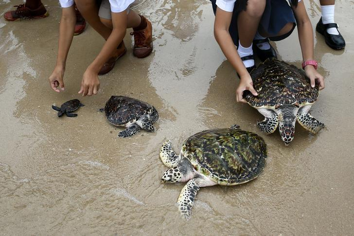 Climate change turning sea turtle babies female