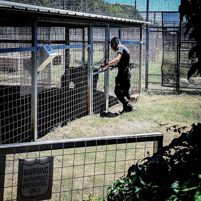 Erik Cowie interacts with a bear at the Greater Wynnewood Exotic Animal Park.