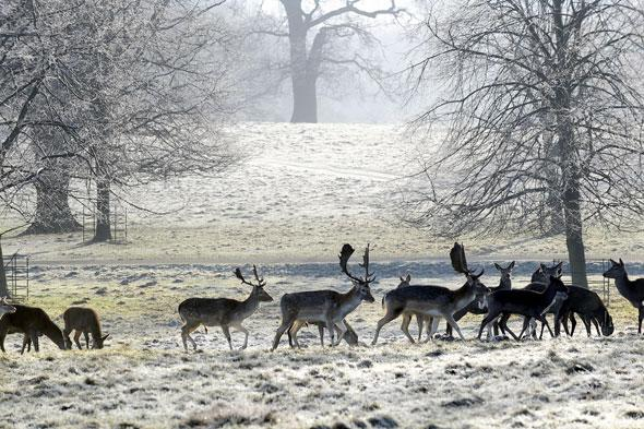 Snow this week! Forecasters say it's colder than Iceland