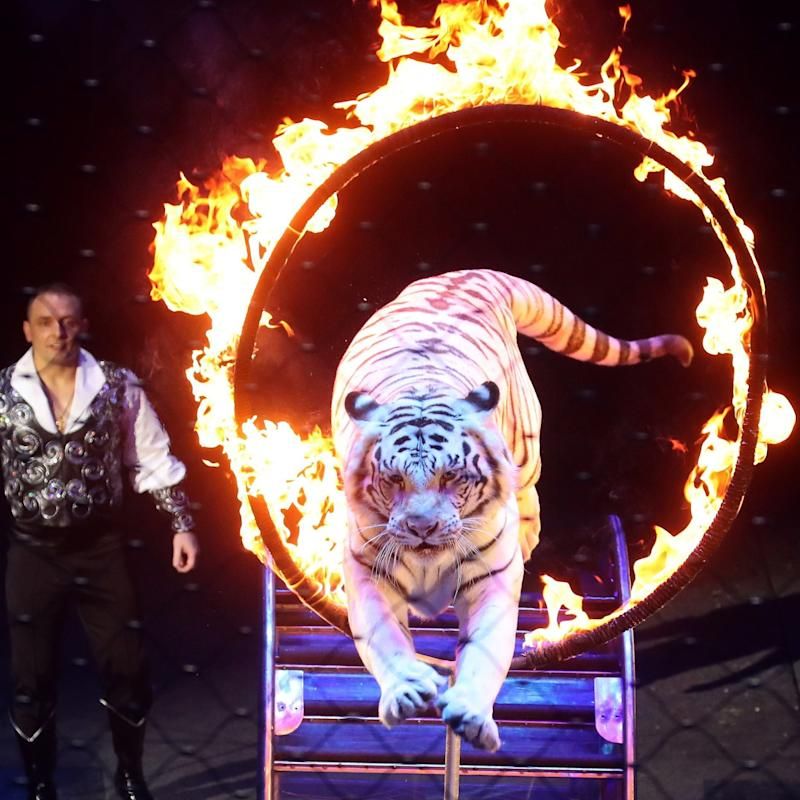 The use of wild animals in circus shows will be outlawed - Vyacheslav Prokofyev/TASS