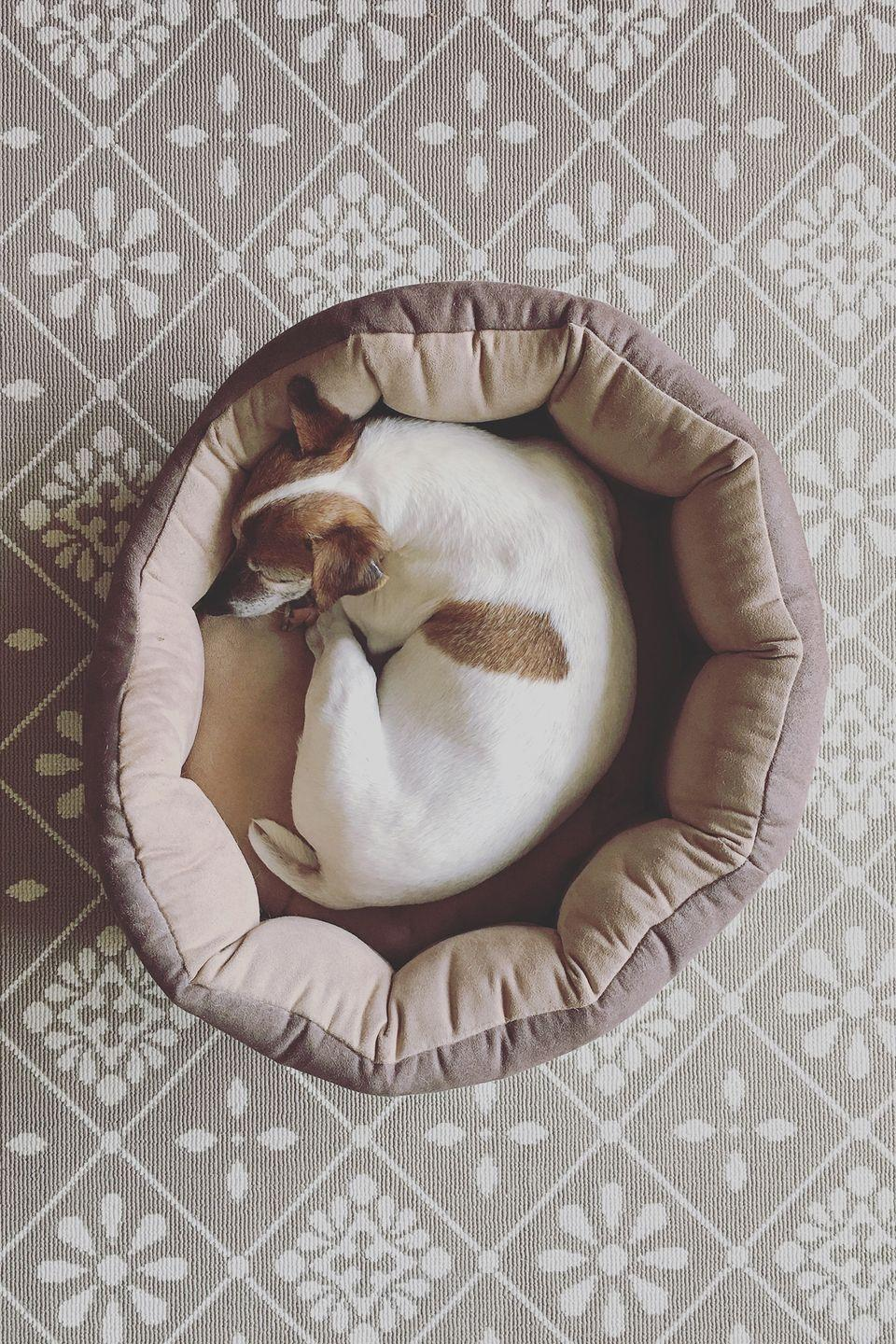<p>You'll never know what previous pets were up to on secondhand pet beds, houses, crates, blankets, and toys. To prevent stinky smells from overtaking your space, and to ensure your furry friend has a clean place to sit or sleep, buy 'em something brand new.</p>