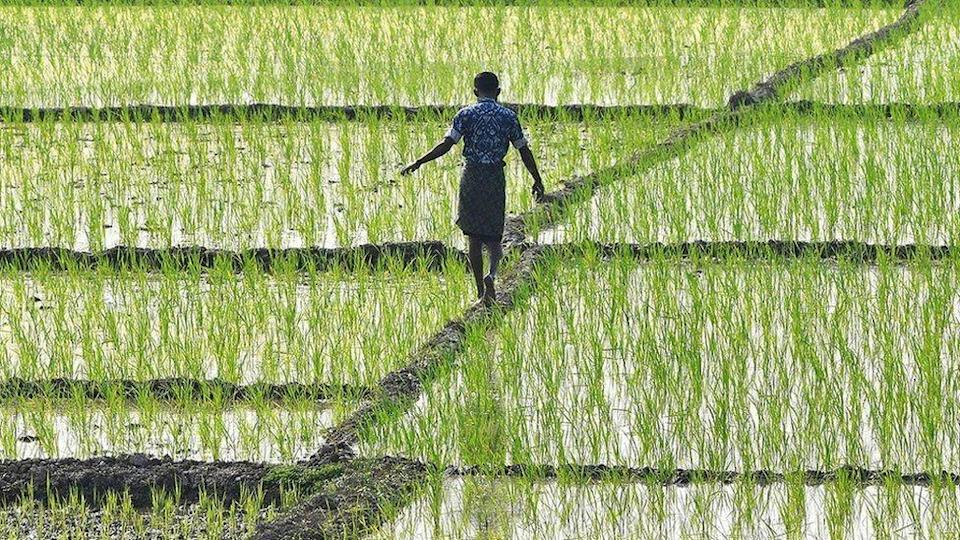 More than half of Indians work on farms