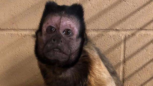 PHOTO: The Wright Park Zoo in Dodge City, Kan., released this photo of Vern, a capuchin monkey, with an announcement that he died on Oct. 29, 2019. (Write Park Zoo/Facebook)