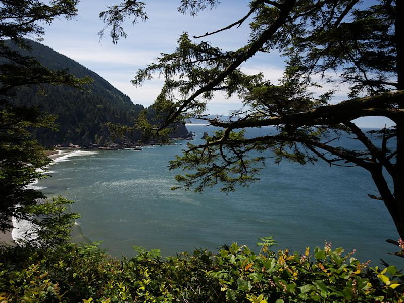 Man dies after falling 100 feet from Oregon cliff while posing for photo in tree