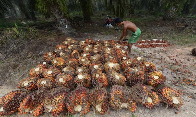 A palm plantation worker in Riau province