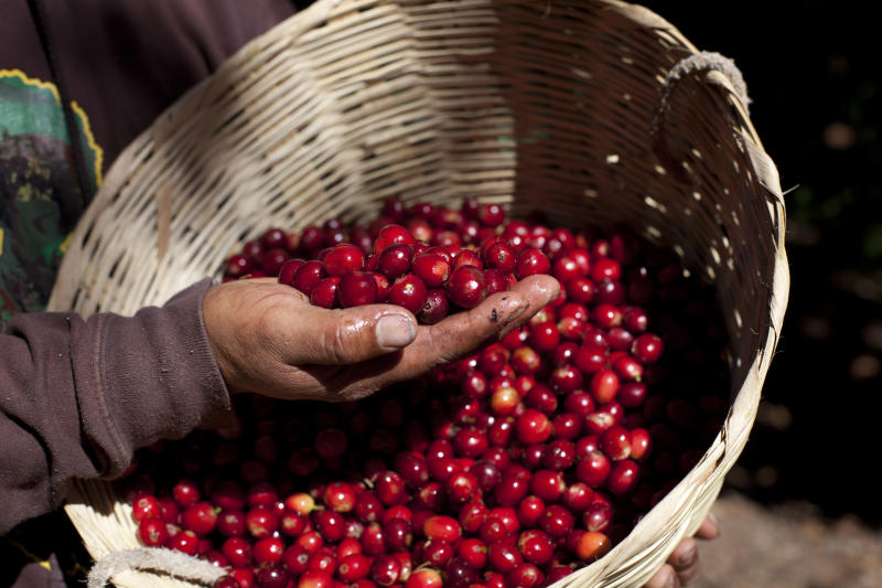 Guatemala declares national coffee emergency