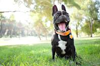 """<p>""""Hey, I just thought of a great new game. I sit here like this, and you try to throw treats into my mouth!""""<br></p><p><strong>Follow Olive on Instagram:</strong> <a rel=""""nofollow noopener"""" href=""""http://www.instagram.com/stuffdogslike/"""" target=""""_blank"""" data-ylk=""""slk:@stuffdogslike"""" class=""""link rapid-noclick-resp"""">@stuffdogslike</a></p>"""