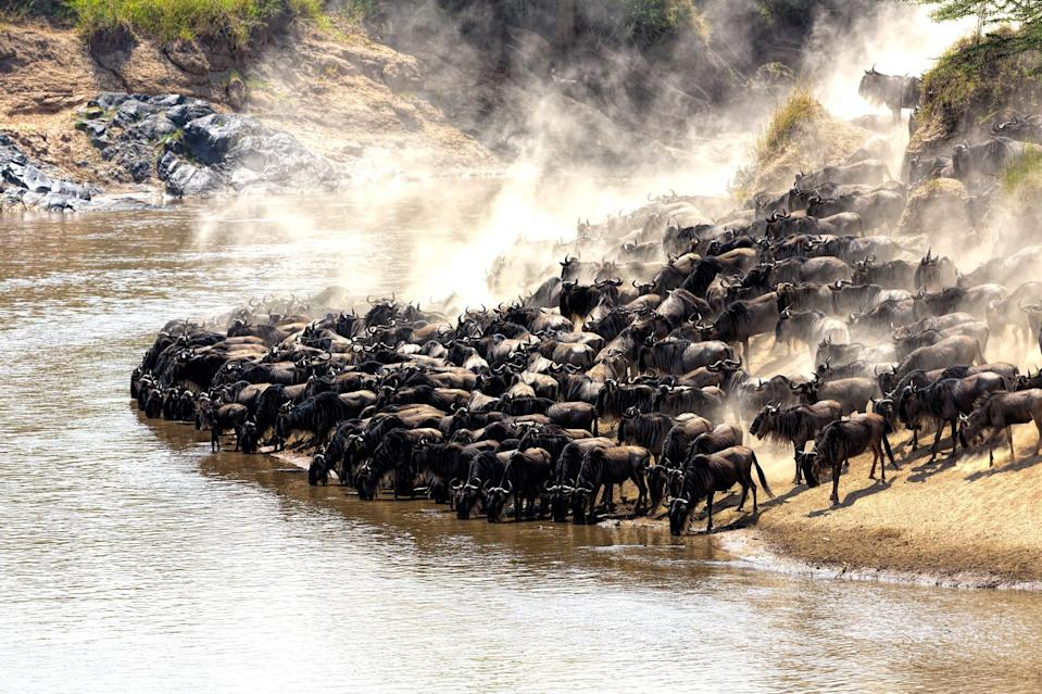 <p>Mara River is definitely worth a visit during the time of the wildebeest migration. Watch the large herd cross the Mara River while battling hungry crocodiles.</p>