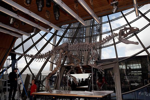 A theropod, a carnivorous dinosaur skeleton is displayed during his installation on the first floor of the Eiffel Tower prior to be sold on auction by Aguttes. This skeleton, 8.7 meters long and 2.6 meters high, discovered in the state of Wyoming, in the western United States, by a team of British paleontologists will be sold on June 4 by the auction house Aguttes, it is estimated between 1.2 and 1.8 million euros. (Photo by Chesnot/Getty Images)