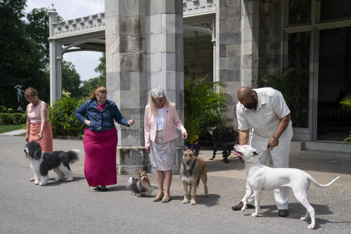 From left, a barbet, biewer Terrier, Belgian laekenois and dogo Argentino are presented for journalists during a news conference, Tuesday, June 8, 2021, in Tarrytown, N.Y., at the Lyndhurst Estate where the 145th Annual Westminster Kennel Club Dog Show will be held outdoors, (AP Photo/John Minchillo)