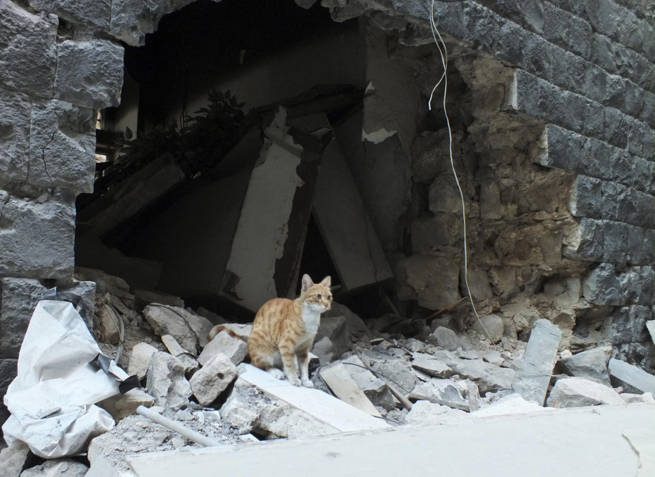 A cat sits on the debris of a damaged house in the neighbourhood of old Homs September 9, 2012. Picture taken September 9, 2012. REUTERS/ Yazen Homsy   (SYRIA - Tags: ANIMALS POLITICS CIVIL UNREST)