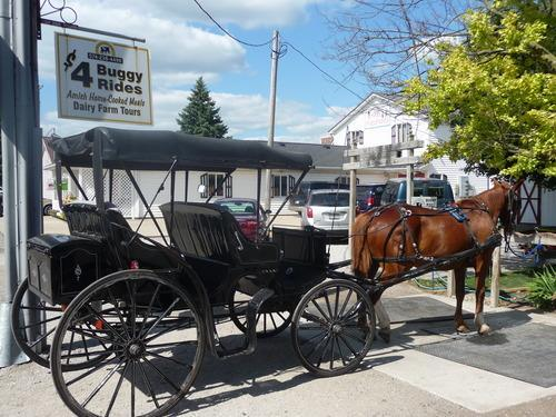 horse buggy amish tour