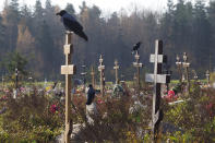 Crows sit on grave crosses in the section of a cemetery reserved for coronavirus victims in Kolpino, outside St. Petersburg, Russia, Tuesday, Oct. 12, 2021. Russia hit another record of daily coronavirus deaths Tuesday as the country struggled with a rapid surge of infections and lagging vaccination rates, but authorities have been adamant that there would be no new national lockdown. (AP Photo/Dmitri Lovetsky)