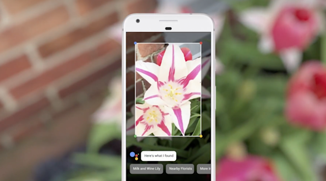 Want to know what flower you're looking at? Google Lens can figure it out. Screenshot by Yahoo Finance
