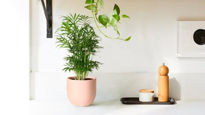 The Sill sells some of the cutest houseplants we've seen.