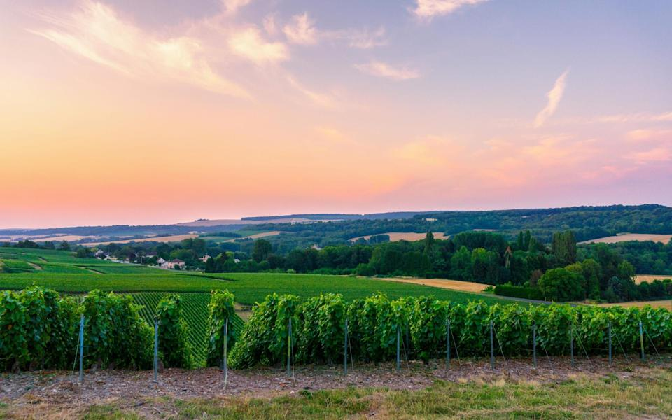 There are worse ways to spend your time than sampling French wines - GETTY