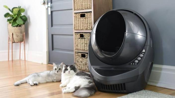 The Litter-Robot is expensive, but you'll never have to scoop poop again.