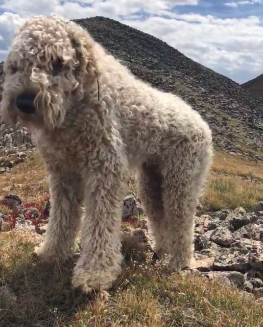 <em>The pooch was last seen running down the hill after the crash (Facebook/Bring Bentley Home)</em>