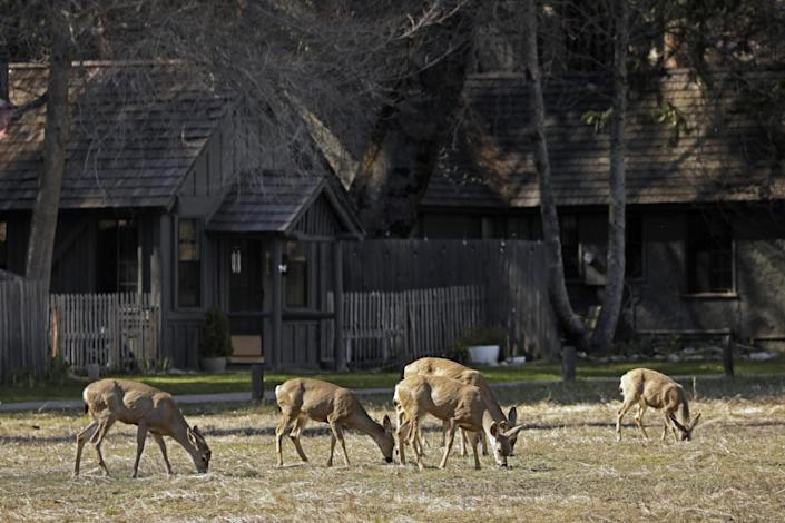 """Deer feed in Yosemite Valley. <span class=""""copyright"""">(Carolyn Cole/Los Angeles Times)</span>"""