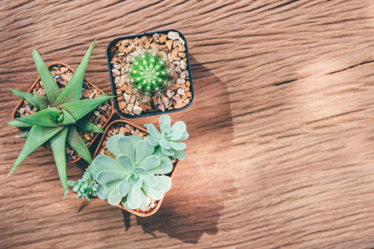 <p>When faced with the responsibility of taking care of another living thing, it helps you learn how to take care of yourself. Get a plant, keep it alive and healthy, and you'll be half way there. </p>