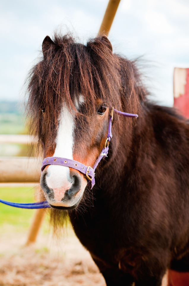 <p>If this hasn't convinced you to seriously evaluate your life and consider buying your very <em>own</em> mini horse, frankly, I'm not sure what will. Mini aficionado or not, who can resist this face?</p>