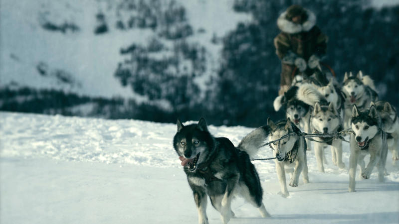 Willem Dafoe leads a sled dog team in 'Togo'. (Photo: Chris Large/Disney+)