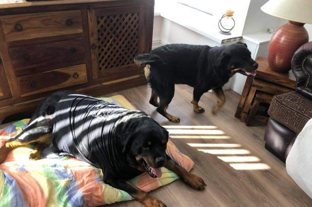Rocky and Tia at home (Picture: GoFundMe)