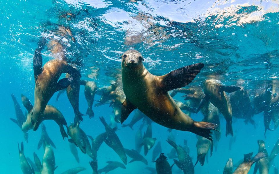 Get close with sea lions off the coast of Mexico - SHUTTERSTOCK
