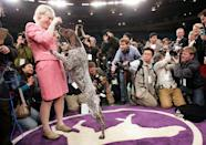 <p>Carlee, a German shorthaired pointer, is up on two legs either trying to get a treat or trying to do a victory dance with her owner.</p>